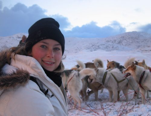 Best Thing to Do in Greenland: Dog Sledding